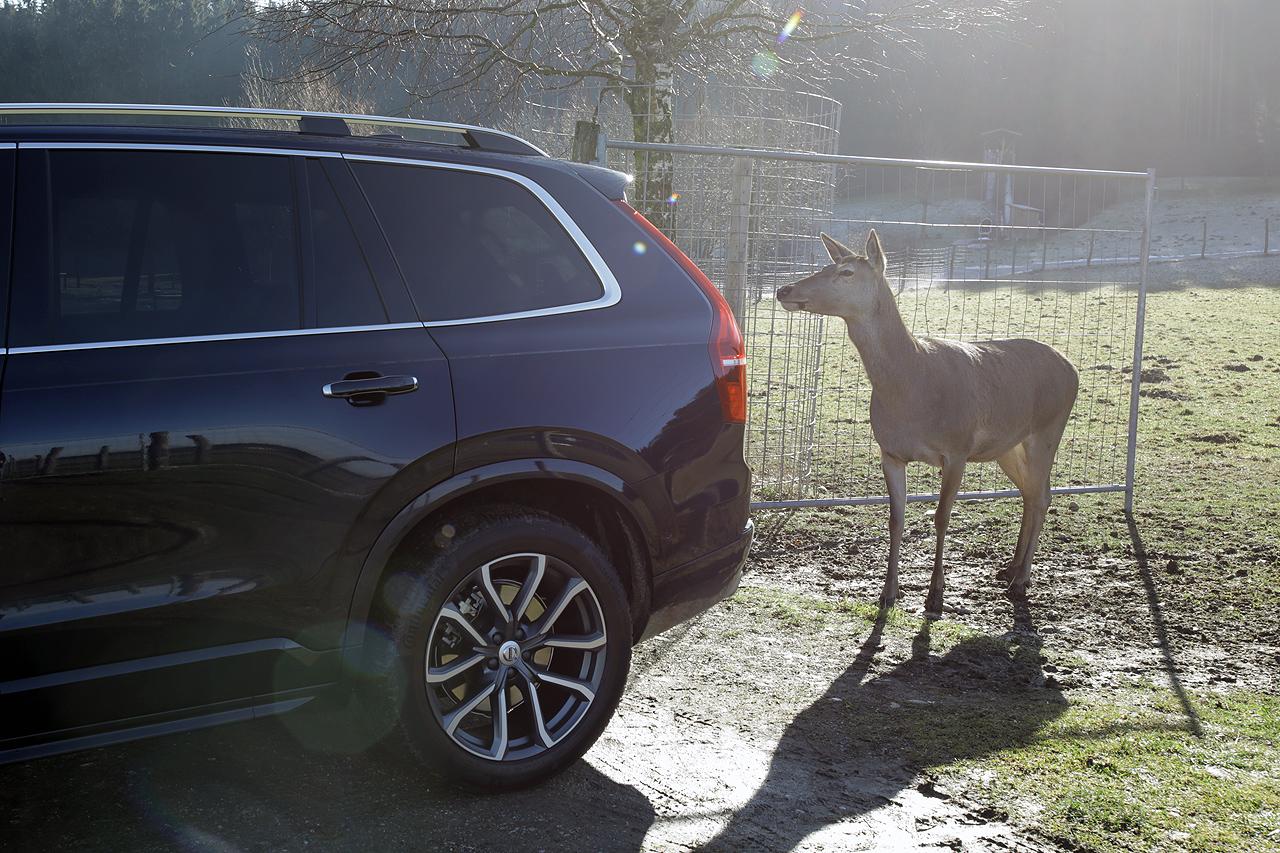 NewCarz Volvo XC90 Elchtest Hirsch