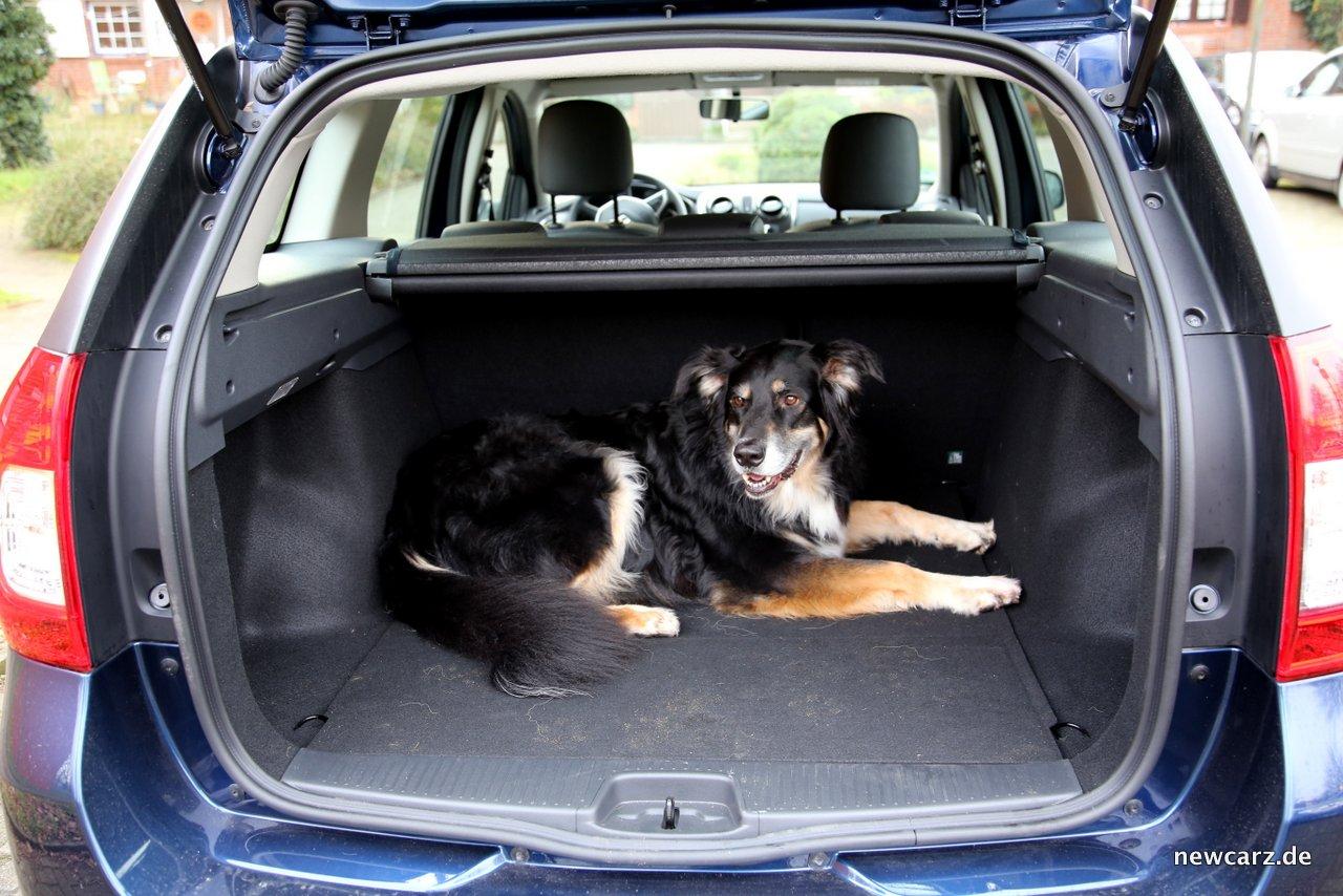Selbst Ein Grosser Schaferhundmix Findet Genug Platz Im Kofferraum
