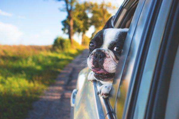 Auch für Hunde stellt Autofahren ein Abenteuer dar