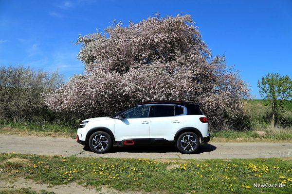 Citroen C5 Aircross Seitenansicht unter Blütenbaum
