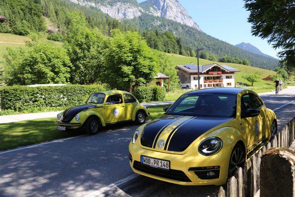 Edelweiß Classic 2019 Beetle & Käfer