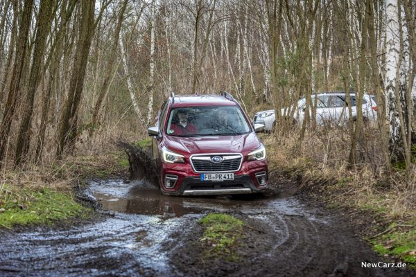 Forester in Mudd