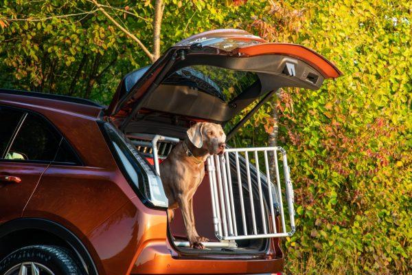 Offene Heckklappe mit Hund