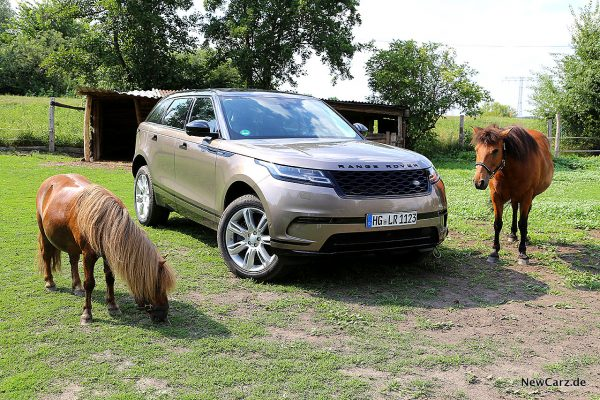Range Rover Velar D300 neben Ponys